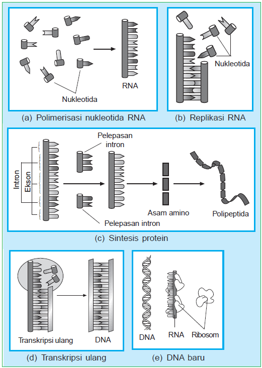 Teori Evolusi Kimia : teori, evolusi, kimia, KEHIDUPAN, Isnaini, Subagya