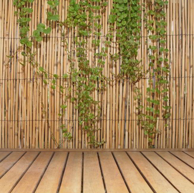 Another Natural Fencing Idea