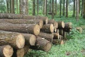 jual pengawet kayu surabaya