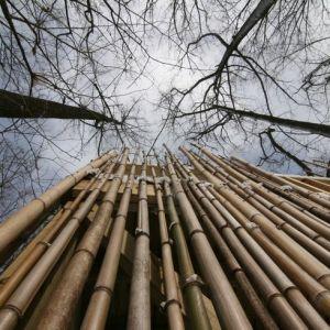 pengawetan bambu laminasi
