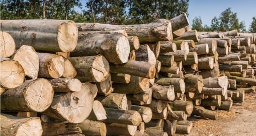 pengawetan kayu karet