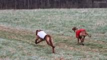 I Konkursowe Biegi Coursingowe Psów Rasy Rhodesian Ridgeback w Woźnikach