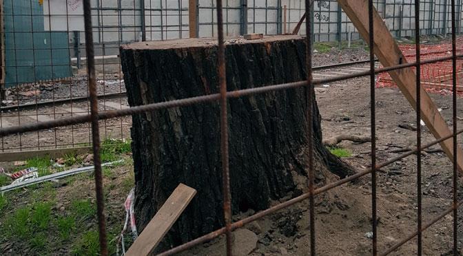 El árbol encarcelado del «paseo del bajo» de Buenos Aires