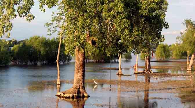 Los árboles anegados por el río Misisipi en Algiers
