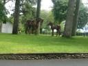 احصنة خشبية.