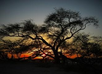 Tree of Life – Sakheer: