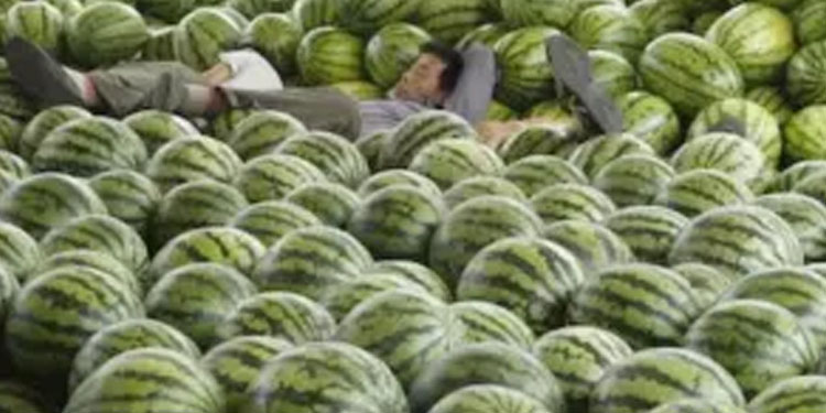 jharkhand army buys farmers bumper watermelon harvest after he offers it for free