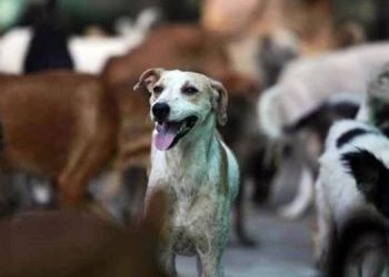 pune-a-senior-citizen-was-bitten-by-a-stray-dog-%e2%80%8b%e2%80%8bin-kondhwa-a-group-of-10-to-15-people-threw-stones-at-the-house-of-an-animal-friend