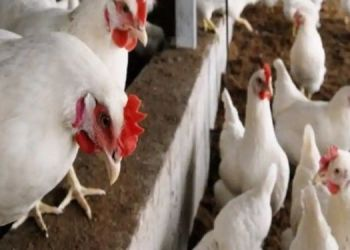 china-reports-human-case-of-h103-bird-flu-here-you-know-more-about-this-virus