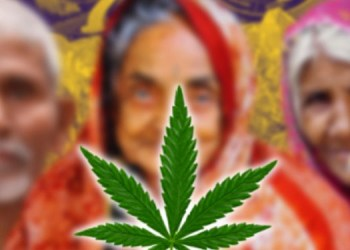 pune crime news an 83 year old man and a 70 and 65 year old woman s were smuggling ganja police seize 4 kg of cannabis