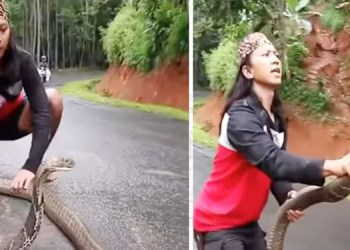 king cobra woman catches king cobra snake by hand video goes viral