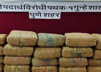 pune crime 40 kg cannabis seized from pune saswad road action of anti narcotics squad of crime branch