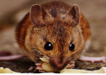 crime news boyfriend forces girlfriend to eat a mouse nest throws her outside window viral news