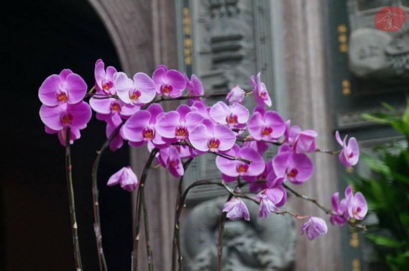 7740_4923_019_Temple.JPG