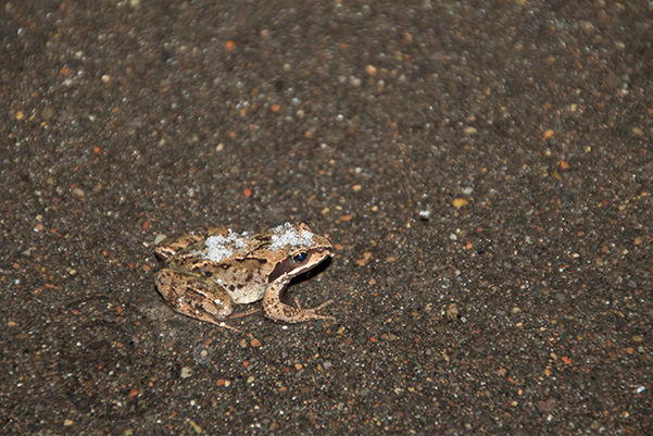 4月の Salamanders