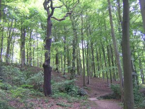 TO GUISELEY ON THE WELCOME WAY VIA HOLLINS HALL AND ESHOLT WOODS: A BAILDON WALKERS ARE WELCOME SECOND-SATURDAY GUIDED WALK: @ Meet at Baildon Potted Meat Stick,