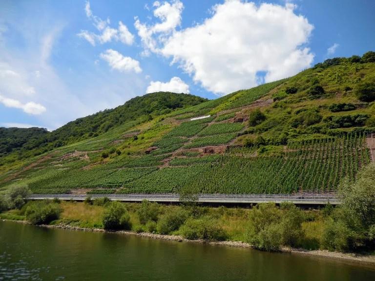 steep hillside vineyards on Mosel River