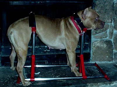 Dog Breeding Stand For Sale