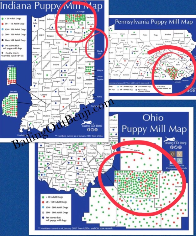 Amish Communities In Missouri Map.Amish Connection To Puppy Mills Bailing Out Benji