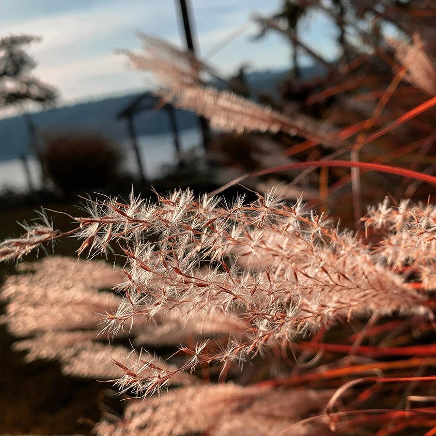 Sunshine on grasses