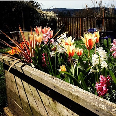 Flowers in planter box