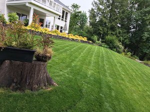 Transition from conventional: manicured lawns and sustainable gardening