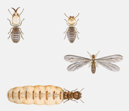 termite control inspection and