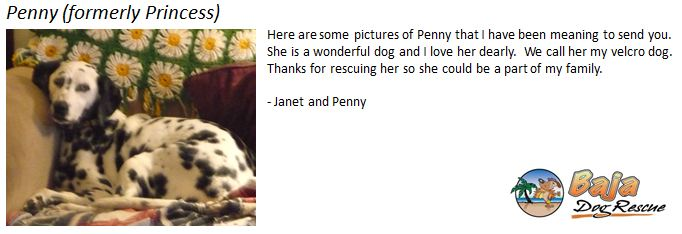 Penny SS