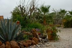 Baja Luna Garden