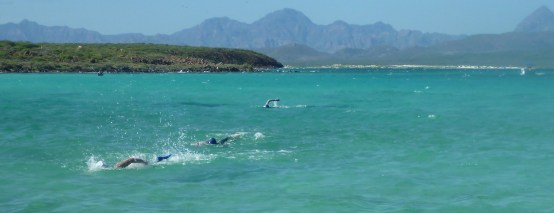 Swimmers near the finish
