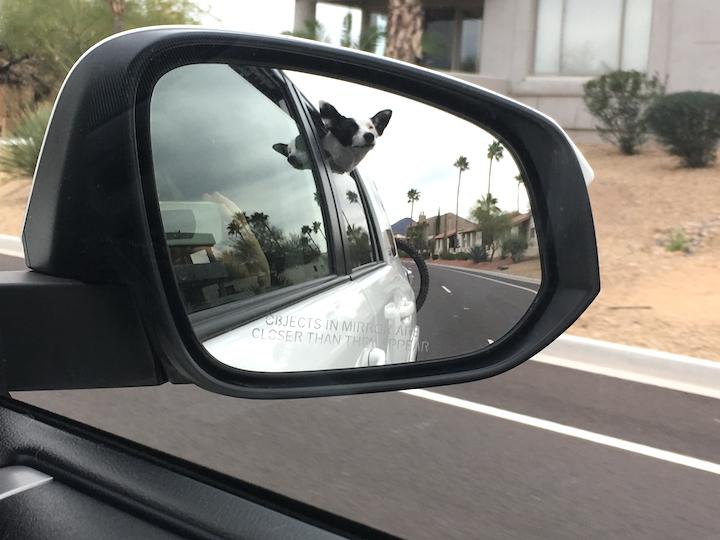 DrivingBajaPets