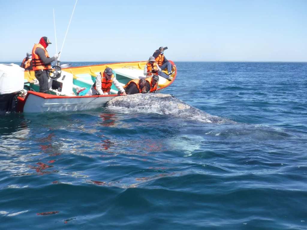 WhaleWatchingPuertoChale