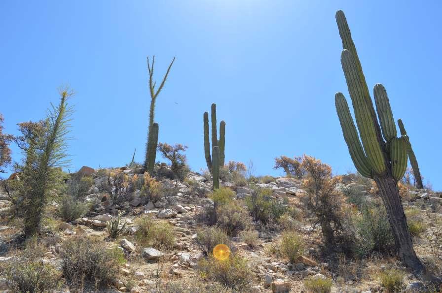 Cactus and Boojum