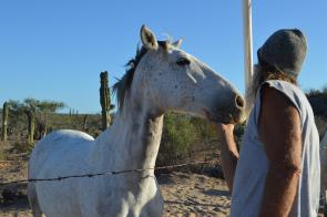 rescue horse with rescuer