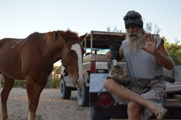 Earthquake, horse and cat.
