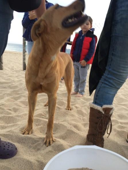 Dog at Turtle Beach Todos Santos