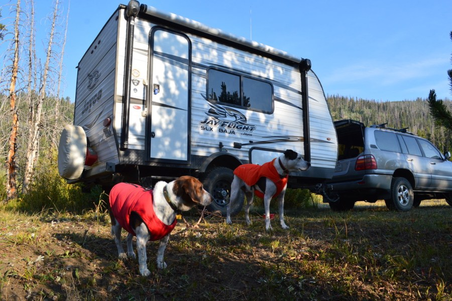 two dogs stand outside a small RV