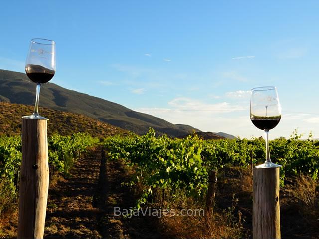 Degustación de Vinos en Casa de Doña Lupe, Ruta del Vino.