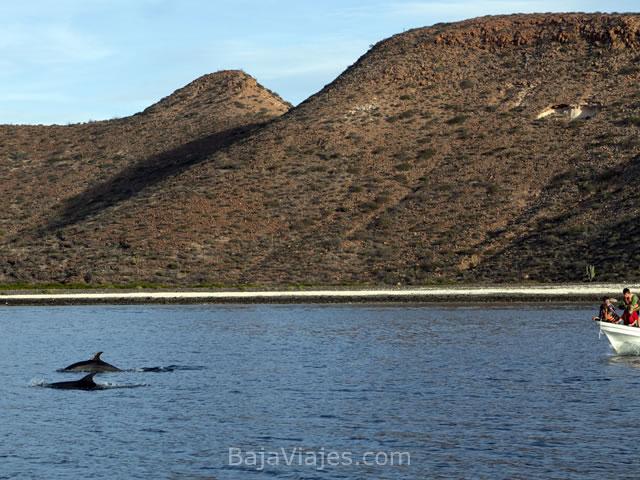 la-paz-todos-santos-delfines-baja-california-sur