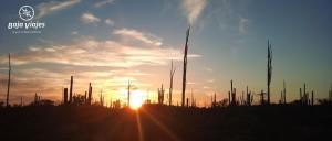 Reserva del Valle de Los Cirios, Baja California, México