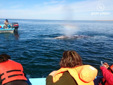 Avistamiento de Ballenas en Guerrero Negro, Baja California Sur