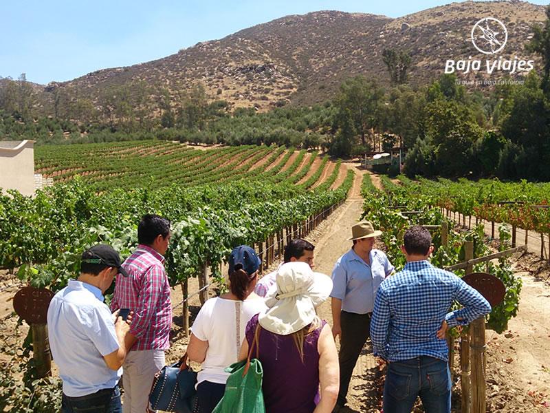 Tour entre viñedos en L.A. Cetto, en Valle de Guadalupe