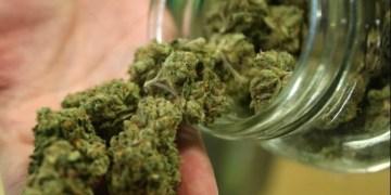 Aseguran a una persona con 390 kilogramos de mariguana en Chiapas 6