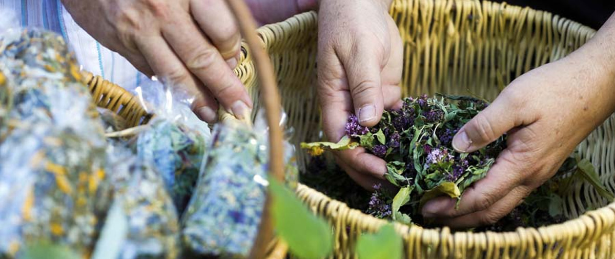 Fortalecer la salud en Guerrero con remedios naturales: una realidad