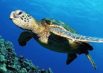 Completa EUA revisión del programa de México sobre captura de tortugas 4