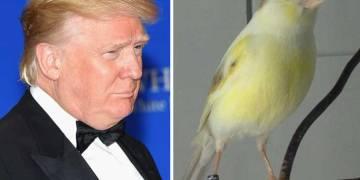 Las múltiples caras de Donald Trump ¡echa un vistazo! 7