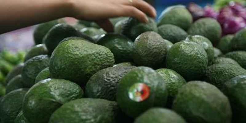 Supera precio de aguacate los 50 pesos por kilo