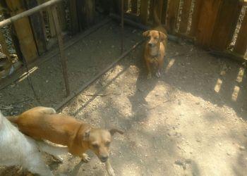 Desalojan casa protectora de animales en La Garita de Acapulco 4