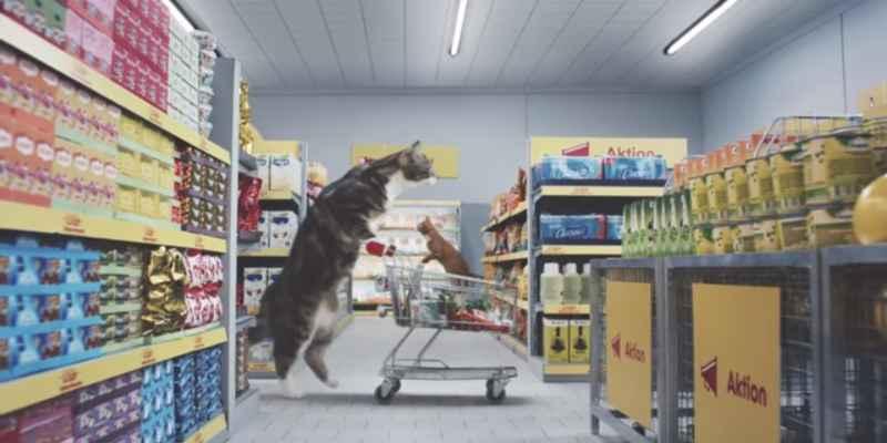 Comercial demuestra que los gatos reinan Internet