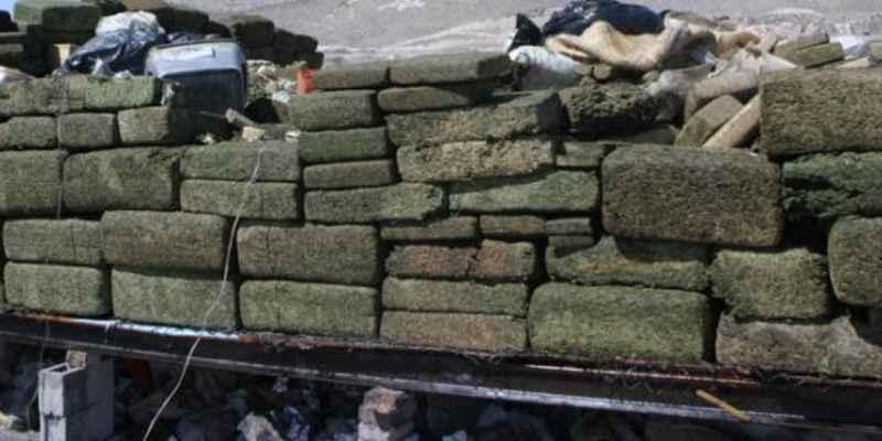 Decomisan más de 526 kilos de mariguana en Nuevo León